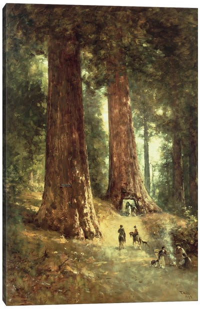 In the Redwoods, 1899  Canvas Art Print