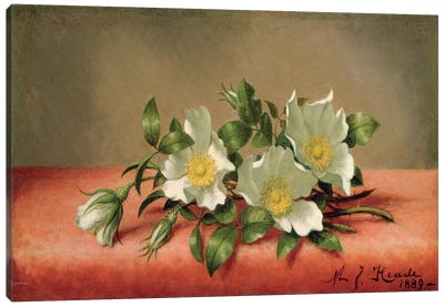 Cherokee Roses, 1889  Canvas Art Print