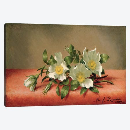 Cherokee Roses, 1889  Canvas Print #BMN4807} by Martin Johnson Heade Canvas Art Print