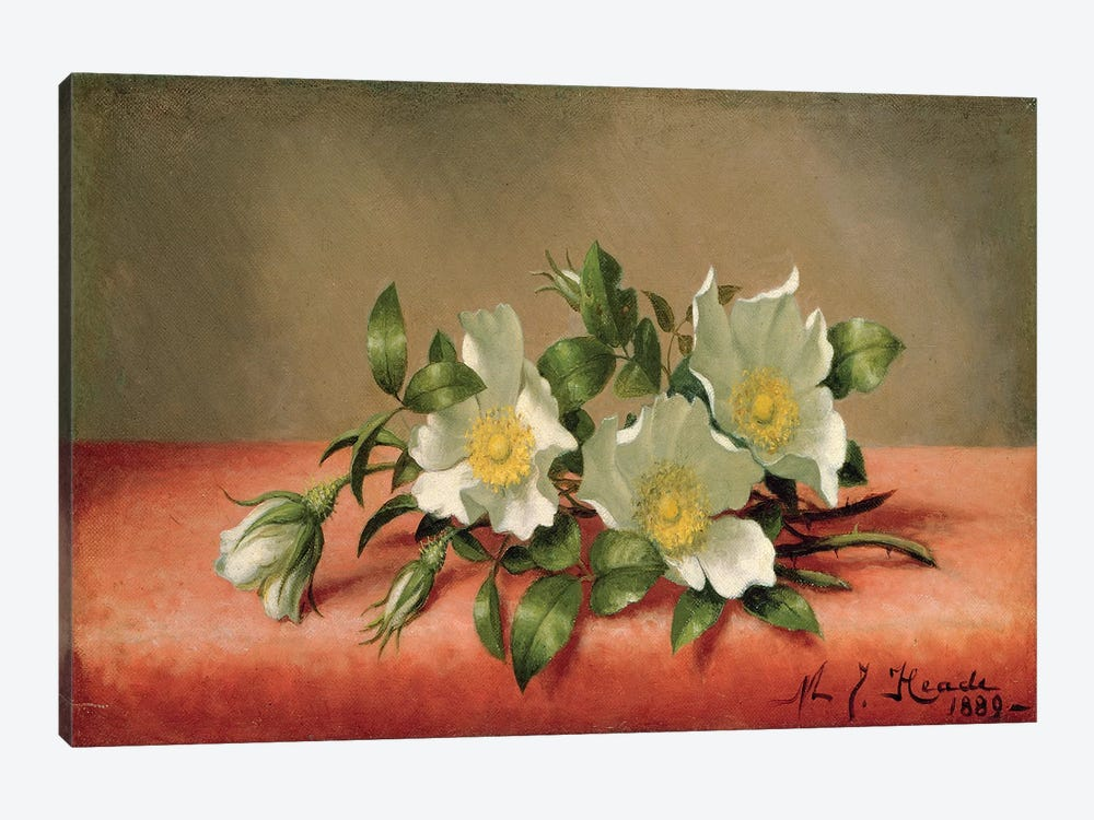 Cherokee Roses, 1889  by Martin Johnson Heade 1-piece Canvas Art Print