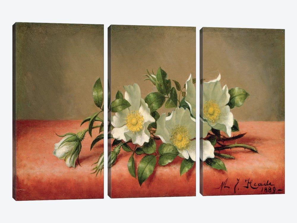 Cherokee Roses, 1889  by Martin Johnson Heade 3-piece Canvas Print