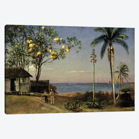 Tropical Scene  Canvas Print #BMN4817} by Albert Bierstadt Canvas Wall Art