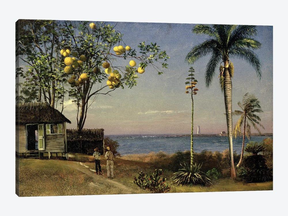 Tropical Scene  by Albert Bierstadt 1-piece Canvas Wall Art
