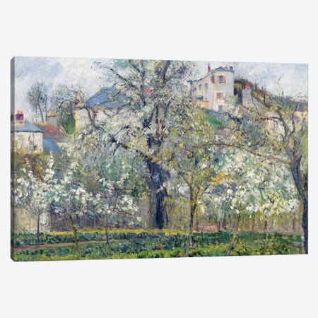The Vegetable Garden with Trees in Blossom, Spring, Pontoise, 1877  Canvas Print #BMN497} by Camille Pissarro Canvas Art