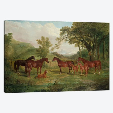 The Streatlam Stud, Mares and Foals, 1836  Canvas Print #BMN4986} by John Frederick Herring Sr Canvas Art