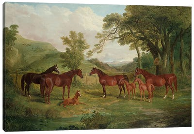 The Streatlam Stud, Mares and Foals, 1836 Canvas Art Print