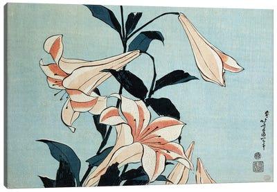 Trumpet lilies  Canvas Art Print