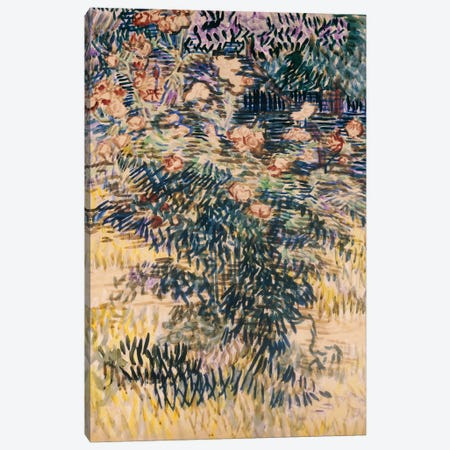Oleanders, the Hospital Garden at Saint-Remy, 1889  Canvas Print #BMN5127} by Vincent van Gogh Canvas Print