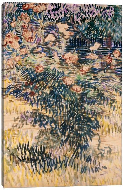 Oleanders, the Hospital Garden at Saint-Remy, 1889  Canvas Print #BMN5127