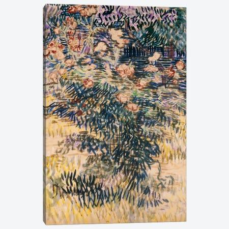 Oleanders, the Hospital Garden at Saint-Remy, 1889  Canvas Print #BMN5127} by Vincent van Gogh Canvas Print