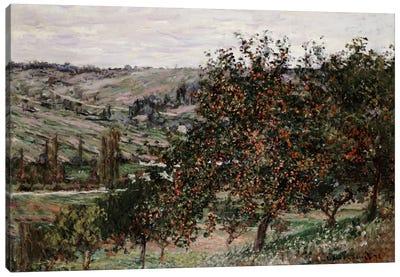 Apple Trees near Vetheuil  Canvas Art Print