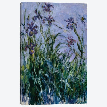 Purple Irises, 1914-17  Canvas Print #BMN5217} by Claude Monet Canvas Print