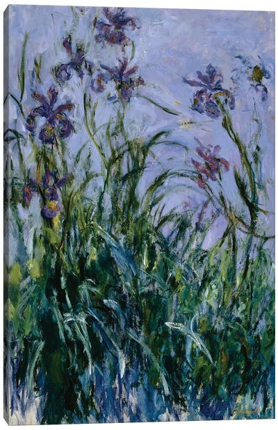 Purple Irises, 1914-17  Canvas Art Print