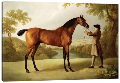 Tristram Shandy, a Bay Racehorse Held by a Groom in an Extensive Landscape, c.1760  Canvas Art Print