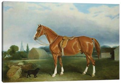 A Chestnut Hunter and a Spaniel by Farm Buildings  Canvas Art Print