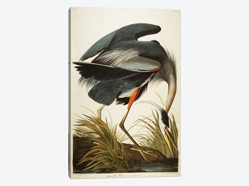 Great Blue Heron  by John James Audubon 1-piece Canvas Artwork
