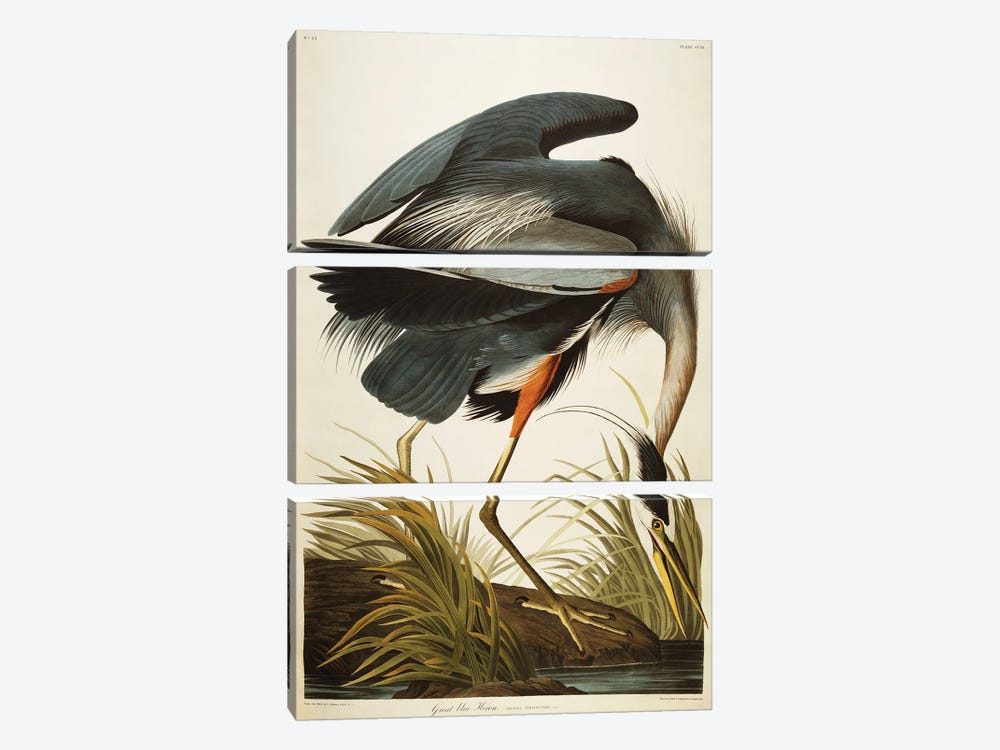 Great Blue Heron  by John James Audubon 3-piece Canvas Art