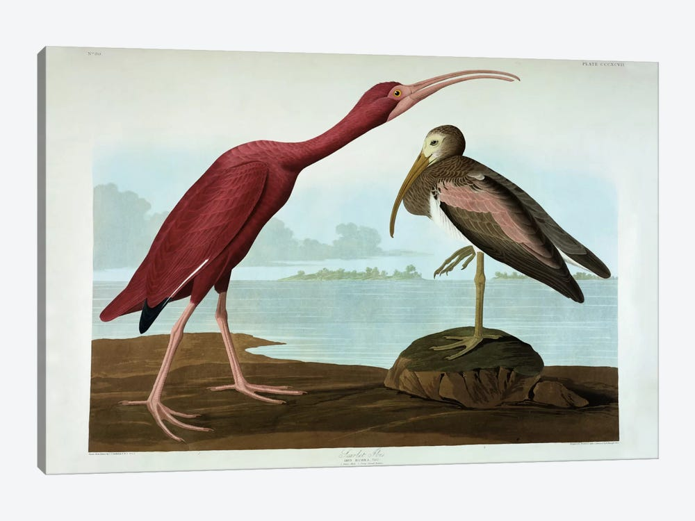 Scarlet Ibis by John James Audubon 1-piece Canvas Wall Art