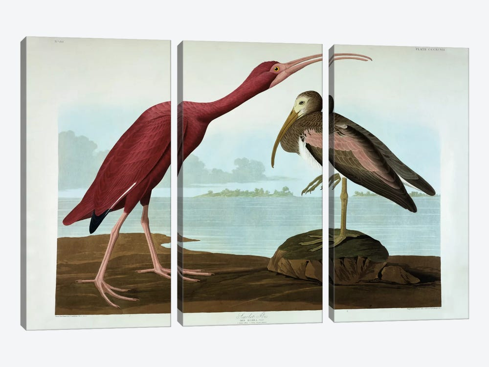Scarlet Ibis  by John James Audubon 3-piece Canvas Wall Art