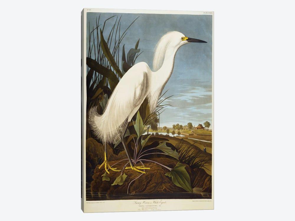 Snowy Heron Or White Egret / Snowy Egret  by John James Audubon 1-piece Art Print