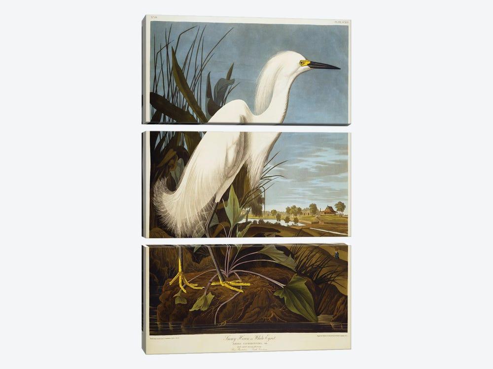 Snowy Heron Or White Egret / Snowy Egret  by John James Audubon 3-piece Art Print