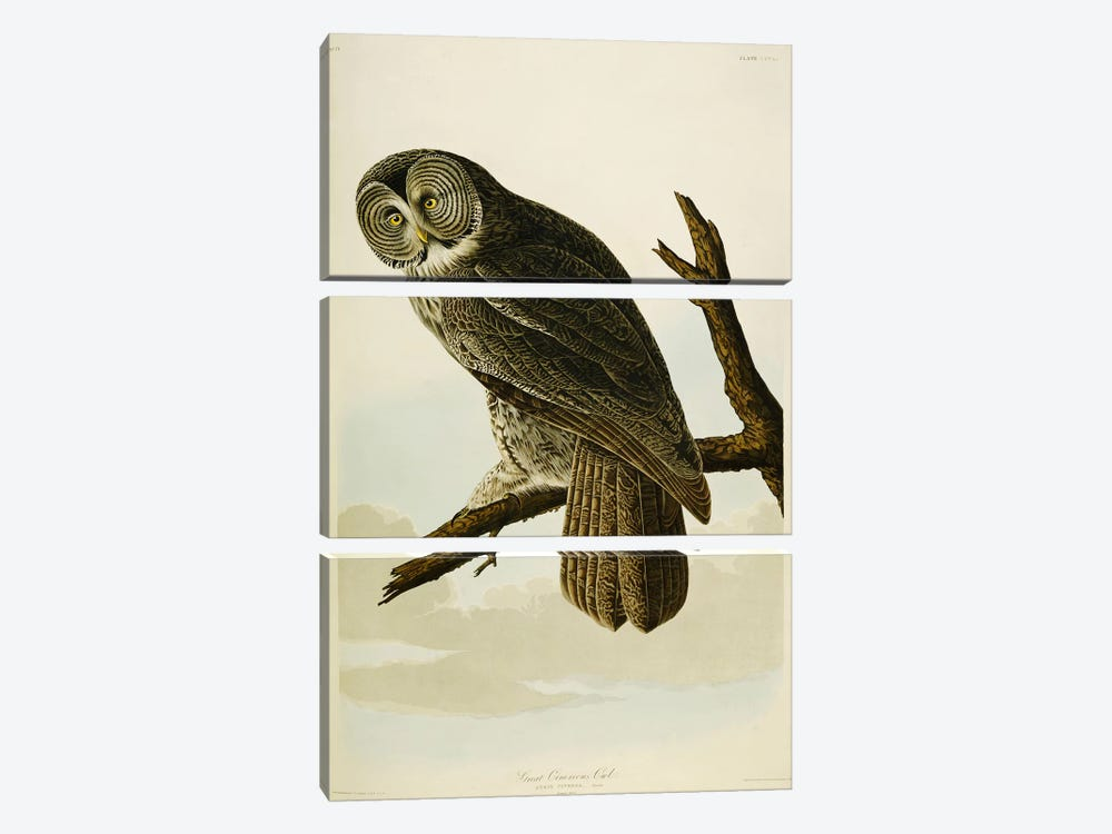Great Cinereous Owl, from 'The Birds of America' by John James Audubon 3-piece Canvas Art