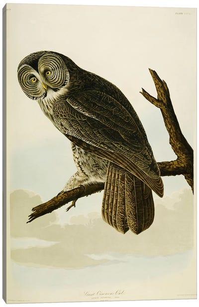 Great Cinereous Owl Canvas Art Print