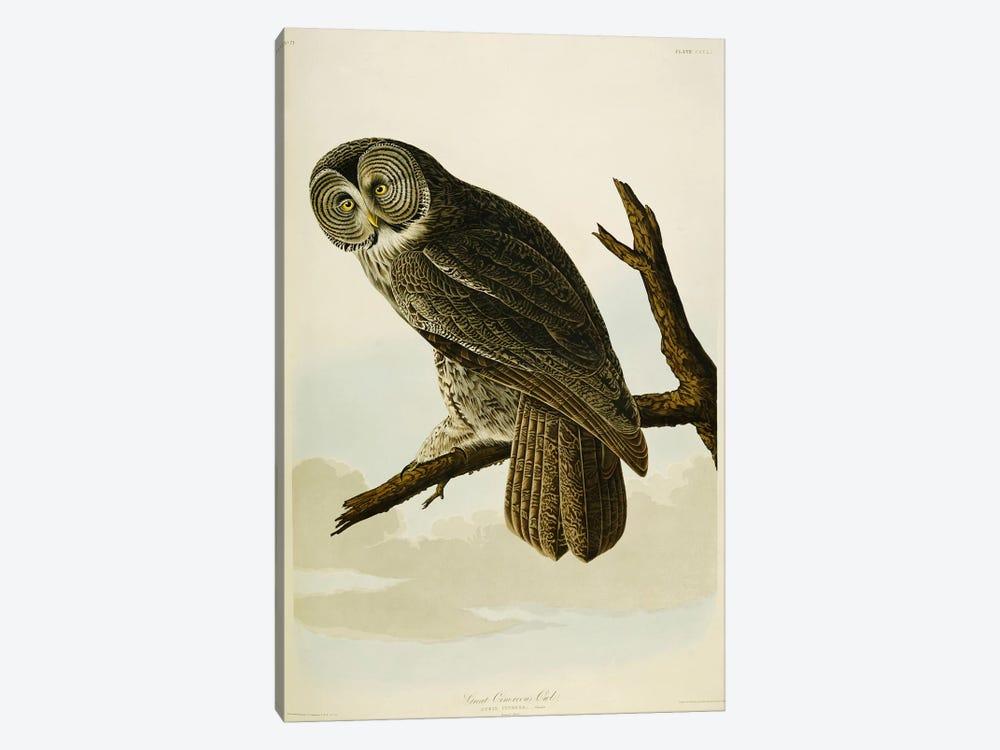 Great Cinereous Owl by John James Audubon 1-piece Canvas Artwork