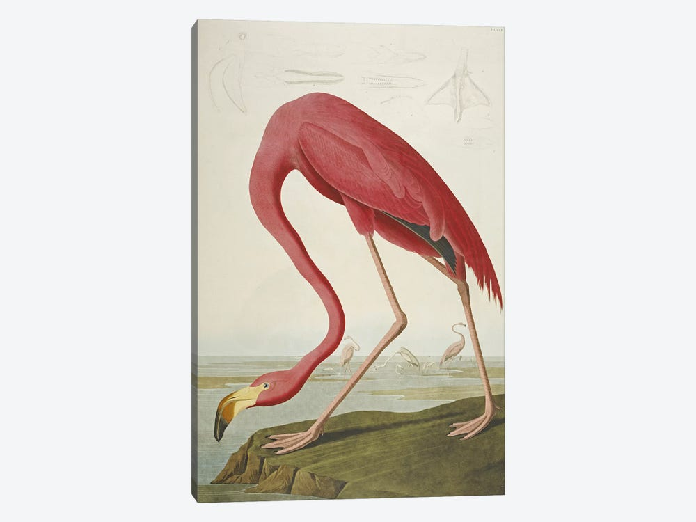 American Flamingo by John James Audubon 1-piece Art Print