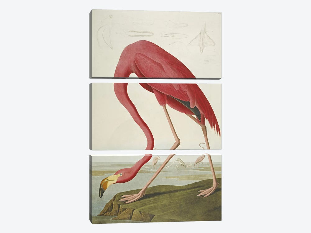 American Flamingo by John James Audubon 3-piece Art Print