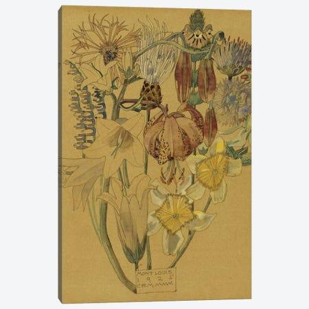 Mont Louis - Flower Study, 1925  Canvas Print #BMN5304} by Charles Rennie Mackintosh Art Print