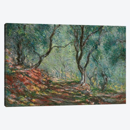 Olive Trees in the Moreno Garden, 1884  Canvas Print #BMN5345} by Claude Monet Canvas Print