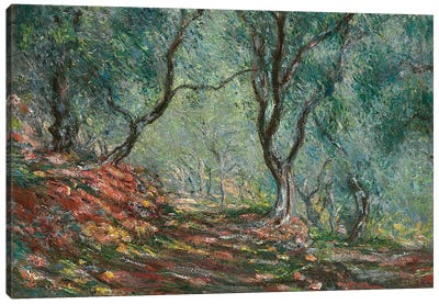 Olive Trees in the Moreno Garden, 1884  Canvas Art Print