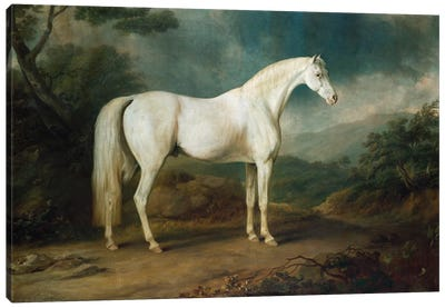 White horse in a wooded landscape, 1791  Canvas Art Print