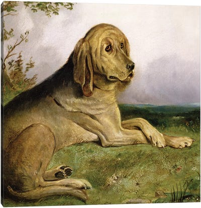 A Bloodhound in a Landscape  Canvas Art Print