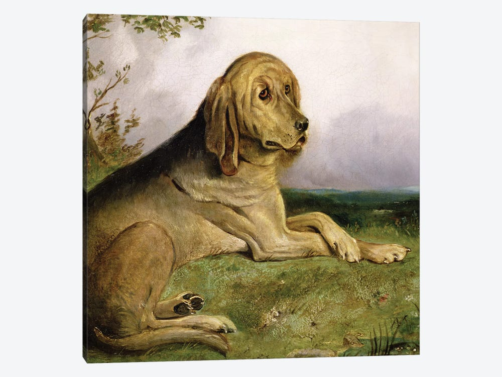 A Bloodhound in a Landscape  by English School 1-piece Canvas Art Print