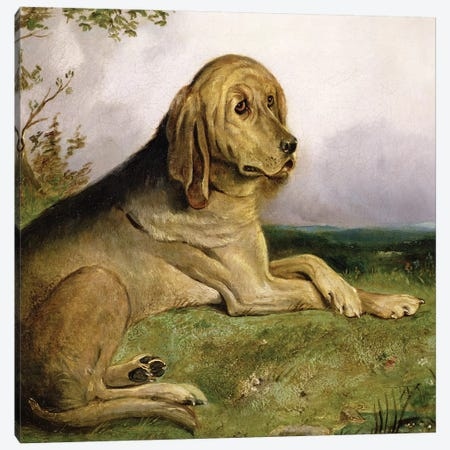 A Bloodhound in a Landscape  Canvas Print #BMN535} by English School Art Print