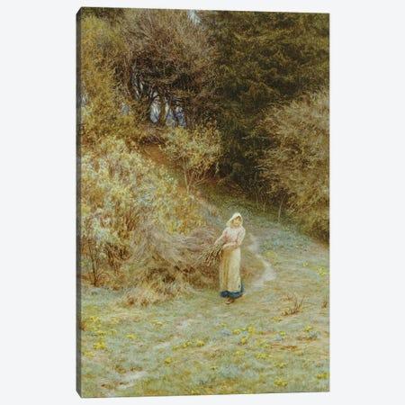 In the Primrose Wood  Canvas Print #BMN5427} by Helen Allingham Canvas Art