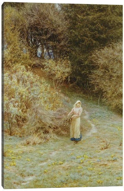 In the Primrose Wood  Canvas Art Print