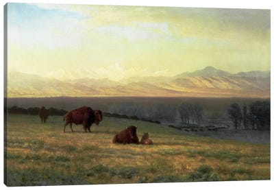 Buffalo on the Plains, c.1890 by Albert Bierstadt Canvas Print