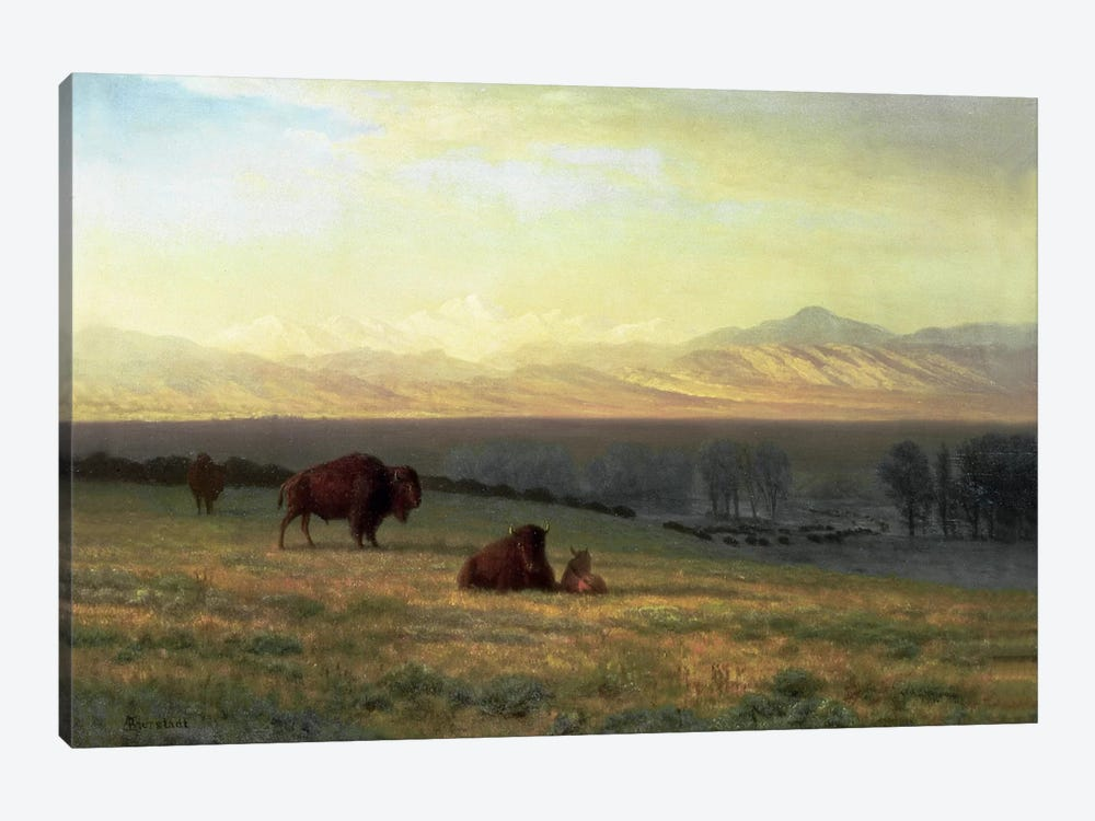 Buffalo on the Plains, c.1890 by Albert Bierstadt 1-piece Art Print