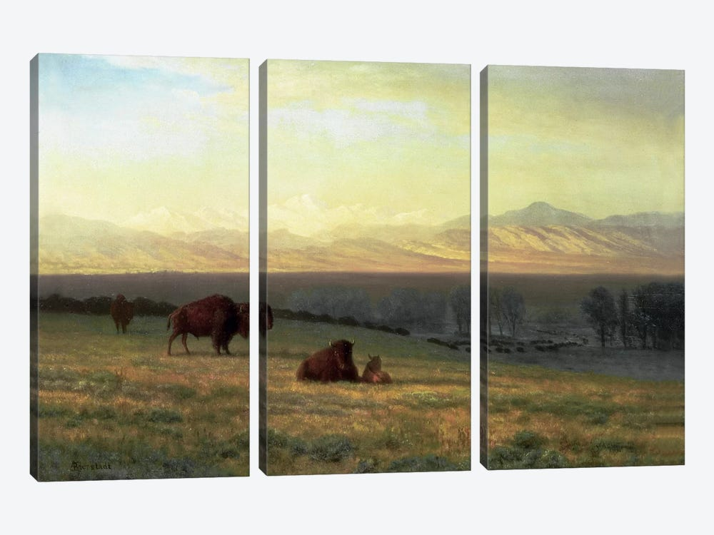 Buffalo on the Plains, c.1890 by Albert Bierstadt 3-piece Canvas Print