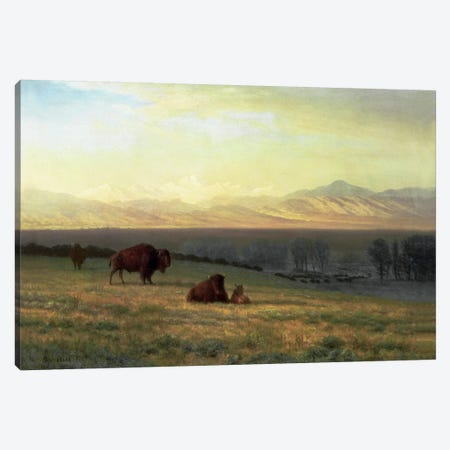 Buffalo on the Plains, c.1890  Canvas Print #BMN5434} by Albert Bierstadt Canvas Print