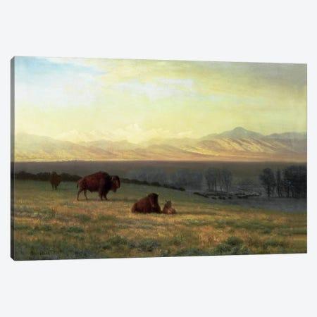 Buffalo on the Plains, c.1890  Canvas Print #BMN5434} by Albert Bierstadt Canvas Print