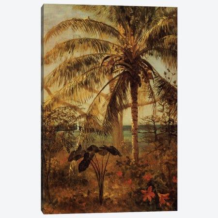Palm Tree, Nassau, 1892  Canvas Print #BMN5437} by Albert Bierstadt Art Print