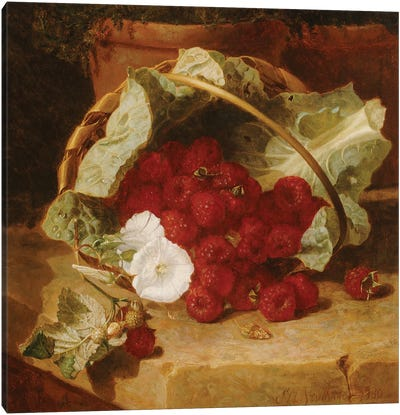 Raspberries in a Cabbage Leaf Lined Basket with White Convulvulus on a Stone Ledge, 1880  Canvas Art Print
