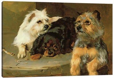 Give a Poor Dog a Bone Canvas Art Print