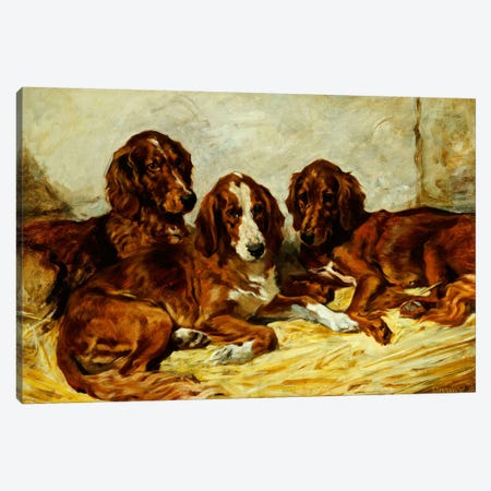 Shot and his Friends - Three Irish Red and White Setters, 1876  Canvas Print #BMN5461} by John Emms Canvas Art Print
