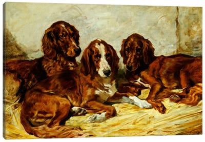Shot and his Friends - Three Irish Red and White Setters, 1876  Canvas Print #BMN5461
