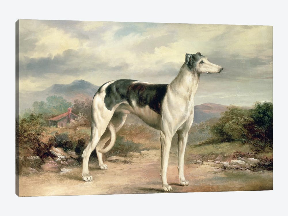 A Greyhound in a hilly landscape by James Henry Beard 1-piece Canvas Art Print